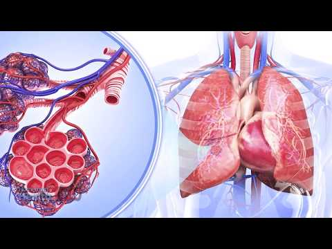 COPD And Your Weight